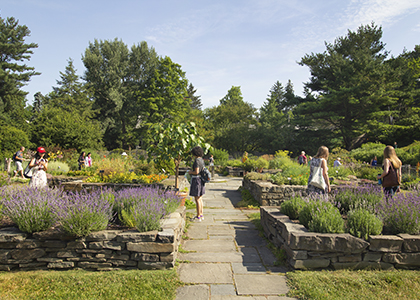 Summer Solstice in the Herb Garden