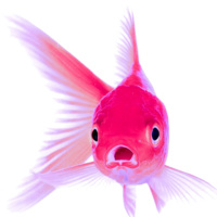 Pink Goldfish: Exploit Imperfection and Captivate Your Customers