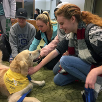 Hand in Paw Therapy Dogs