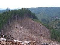 CEL Fusion Discussion: Should Trees Sue Humans?