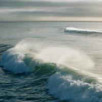 UC Santa Cruz Alumni Excursion: The Effects of Climate Change on Marine Life