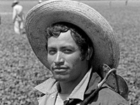 "Exhibit ""Bittersweet Harvest: The Bracero Program 1942-1964"""