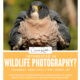Learn About Wildlife Photography!