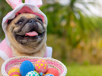 Photo for Fido with the Easter Bunny