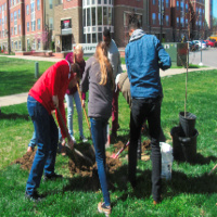 UofL Arbor Day Celebrations! Plant Trees!