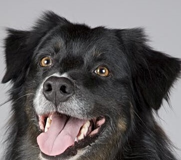 De-Stress with Dogs at Northwest Campus