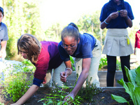 2019 Fire Ant Management for School & Community Gardens