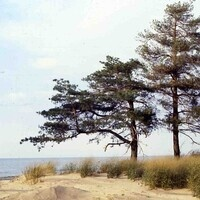Adopt A Beach Program at Presque Isle