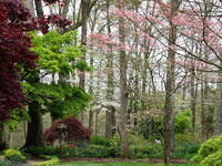 Urban Tree Care Workshop