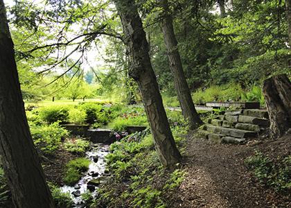 Garden and Arboretum Hike