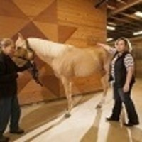 Adult (Horse) Riding Clinic Begins