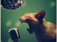 Open Mic at the Cat!